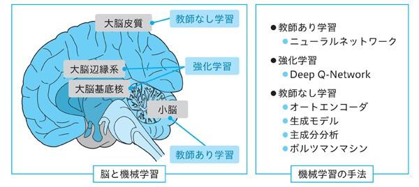 ディープラーニングと脳の関係とは? 人工ニューロンや再帰型 ...